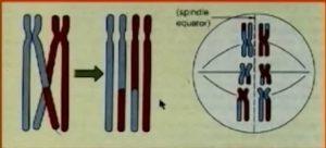 Chromozome2