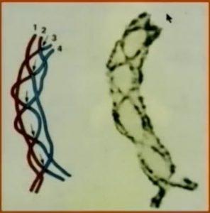 Chromozome3
