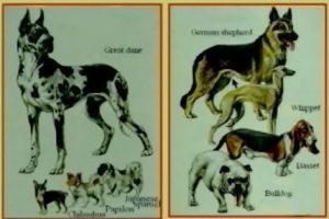 Dog types 1