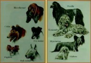 Dog types 3