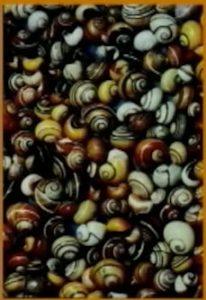 Snail varieties