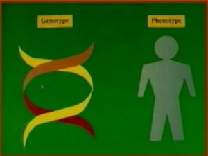 genotype-phenotype
