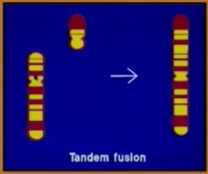 tanden fusion