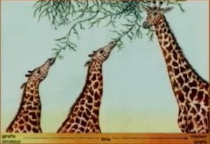 Genes of Genesis three giraffes